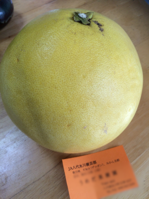 雨雨ふれふれだから世界最大の柑橘類ができるの?ココイチじゃなくてヒコイチ!カレー街道もある県南エリア