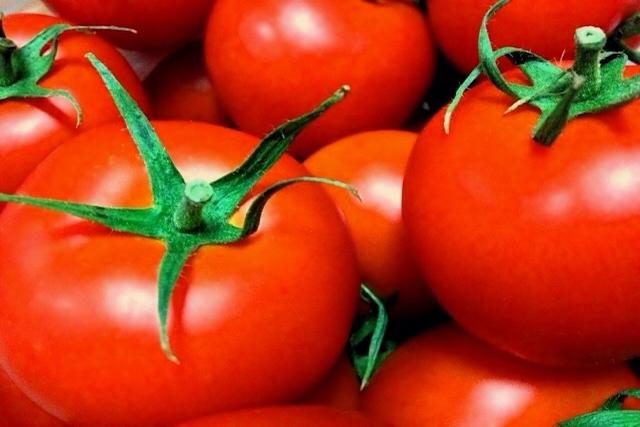 トマト嫌いが熊本に移住したら突然トマト大好きマンになった理由とは