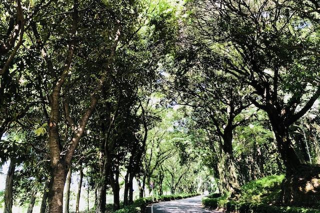 """木々に挟まれる""""緑のアーチロード""""を通り抜けてみましょう~熊本市内・篇~"""