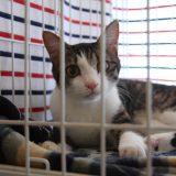 日本初! ジュエリーショップに保護猫譲渡所「Cattonネコリパジョートフルステーション」 オープン