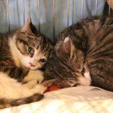 熊本の保護犬猫たのしい譲渡会『アダプション・パークVol.16』に行ってみた!