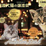 熊本の保護犬猫たのしい譲渡会『アダプション・パークVol.16』1/19(土)1/20(日)