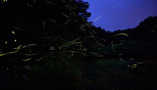 【黒川温泉】ホタルが棲む夜の里山見学!地元人の秘密スポットへご案内!