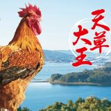 """【熊本名物研究】""""天草大王""""熊本が誇る、幻の食用地鶏!サイズは世界的にもキング級!"""