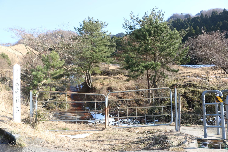 高森殿の杉