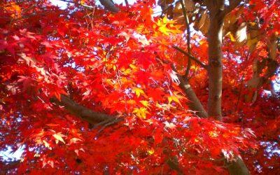 熊本の紅葉TOP3!秋の絶景ならまずココに行け!もみじ狩り名所おすすめスポット!ここを押さえておけば間違いなし!